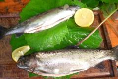Outdoor Cooking: Frisch gefangener Fisch in Finnland