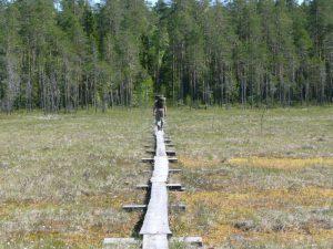 Boardwalk - Bärenpfad - Karelien - Finland